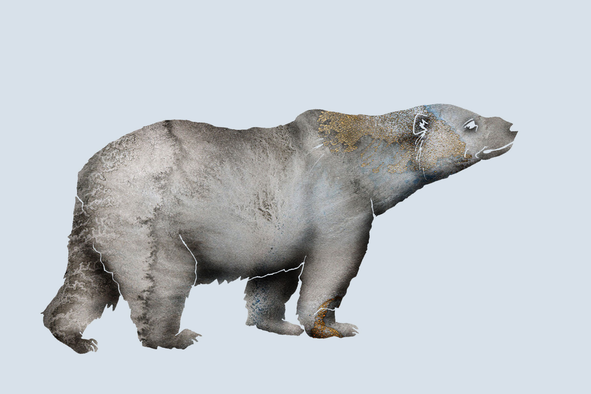 grizzlybjorn